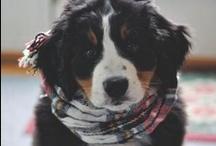 Puppy Door Decs / by Jessica Abernettles