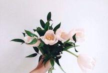 Fleurs / flowers // plants // botanics