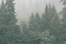 Mountains...Forests... /  There is a pleasure in the pathless woods... Lord Byron