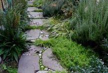 Garden Goals / by Sarah Chiuchiolo
