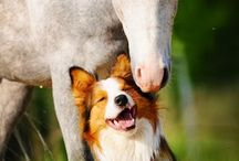 Furry Friends / by Fiona Bowtrycle