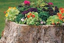Gardening Ideas / by Vonnie Byers