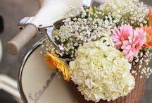Flowers / by amanda erlinger