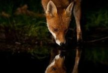 Creatures / by amanda erlinger