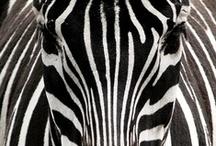 On a Safari / by Stephanie Nicheporuck