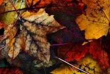 Season Fall | Herfst / Season | Seizoen Fall