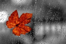 Kisses of Rain / by Yasir Bokhari