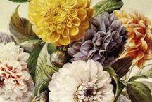 Botanical illustrations / by Silvia Boscolo
