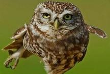 OWL LOVE! / All things owl! I love owls! Any kind.