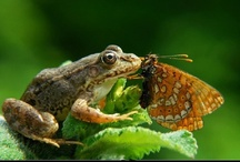 Are you my Prince? / All kinds of FROGGIES!