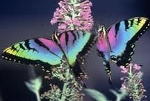 Fluttering by / Butterflies, Dragonflies & Ladybugs <3