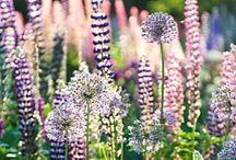 Garden: The Pretty Ones