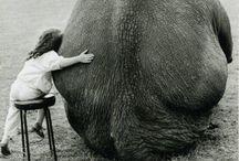 Elephants! / My pet I wish.  / by Jeri Rafter