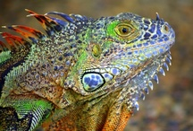 Leaping Lizards / Lizards & other Reptiles I Love!