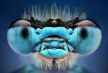 Creature Close ups / Close up Pics of All creatures great & small! <3