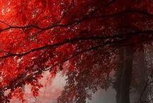I love the Fall! / Autumn, Leaves