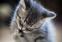 Cats / by Renee Ruben
