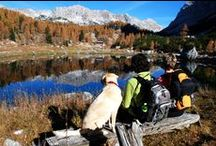 Fun Activities for You + Your Dog / I'm all about hiking and camping. There are a lot of other fun outdoor (and some indoor) activities you can do with your dog. Check them out!