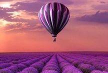 Purple / Nature and fashion, the colour purple
