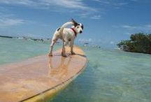 Dogs + Paddleboards / Stand up paddleboarding (SUP) is fun! Doing it with your dog is even cooler.