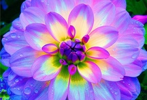 Flowers & Plants & Gardens / by Debb Propes