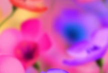 pretty things / by Blonda Gomez