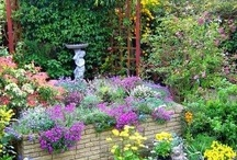 Flower Gardening / by Julie Andersen