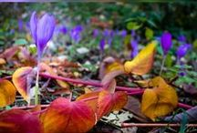 Nature Photography @ionpaulaelena / Nature photos from beautiful Romania, Europe.