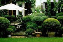 garden / by Louise Liljencrantz Sievers