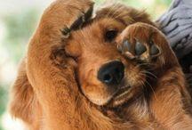 SO CUTE YOU ANIMAL! / by Stephanie Majeau