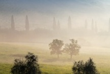 Nebel / by Christine H.