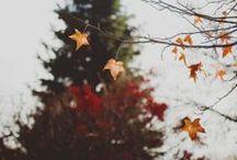 Autumn / by Amanda Weisbrod
