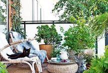 Grünerwirdsnicht:  Balkon