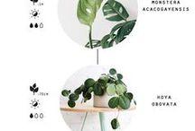 Grünerwirdsnicht:  Greengreengreen