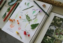 Exploring God's Creation in Nature and Science / Exploring the treasures of nature study and pursuing the sciences through living books and hands-on experiments.