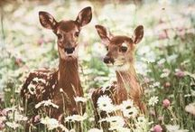 Deer Inspiration / by Alika Faythe Despres Photography