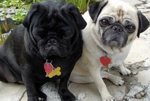 Goonstada & Gussygruba - My baby puggies! / by Dreama Rockwood