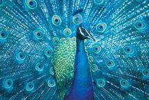 Beautiful birds / by Tina Johnson