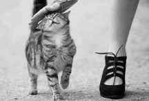 Inspiration - Cats / Gat-^o^-grafias para el mundo