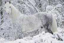 Inspiration: Horses