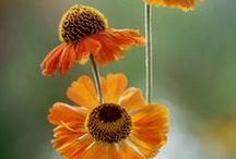 Garden Ideas / by Mary Ellen Sanger