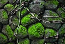 Inspiration: Fresh Spring Moss
