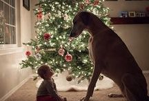 Photo holiday ideas / by Mindy Kowieski Kerr