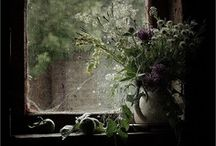 windows / by plenty to declare photography