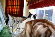 Pawsitively Cats  / Cats well all animals have a special place in my heart.  Especially our beloved family members, Sir Walter Riley & Bailey Our Pretty Kitty. / by Shelly Hood