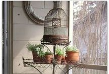 Birdcages / by Star Schell