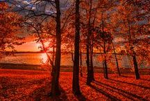 Autumn Leaves / The beautiful colors of fall...