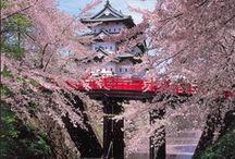 Cherry Blossoms / So lovely!!