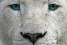 ANIMALES Y MASCOTAS / SON TODO LO QUE REPRESENTAN SUMISIÓN, FUERZA DESCOMUNAL Y TERNURA EN TAMAÑOS INIMAGINABLES. QUE NOS OFRECE SU COMPAÑÍA Y A LAVES ALIMENTACION.