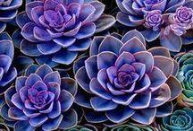 grow. / terrariums & plants.